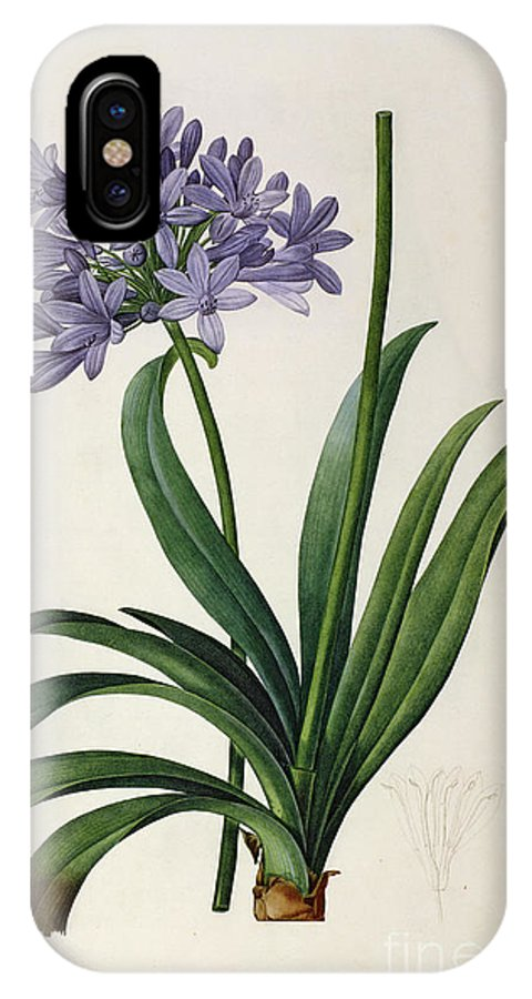 Agapanthus IPhone X Case featuring the painting Agapanthus Umbrellatus by Pierre Redoute