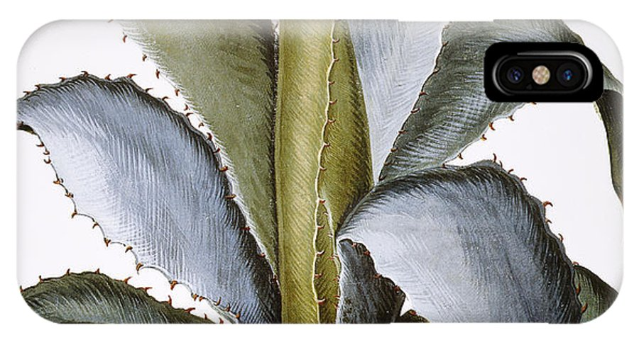 1613 IPhone X Case featuring the photograph Agave, 1613 by Granger
