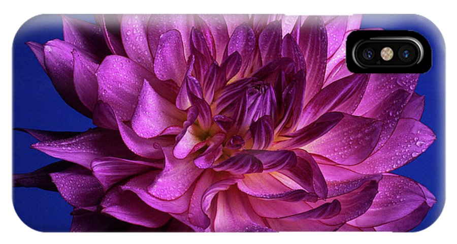 Dahlia IPhone X Case featuring the photograph Aglow by Doug Norkum