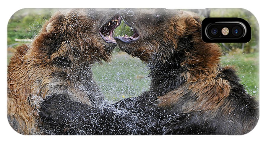Yellowstone IPhone X Case featuring the photograph Agree To Disagree by Sandra Bronstein
