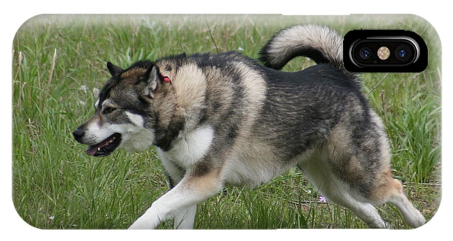 Dog IPhone X Case featuring the photograph Alaskan Malamute 1 by David Dunham