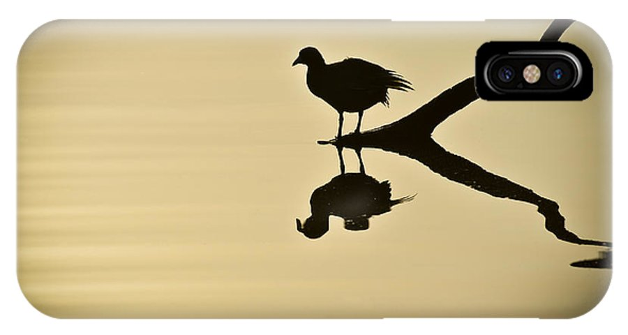Bird Silhouette IPhone X Case featuring the photograph All By Myself by Carolyn Marshall