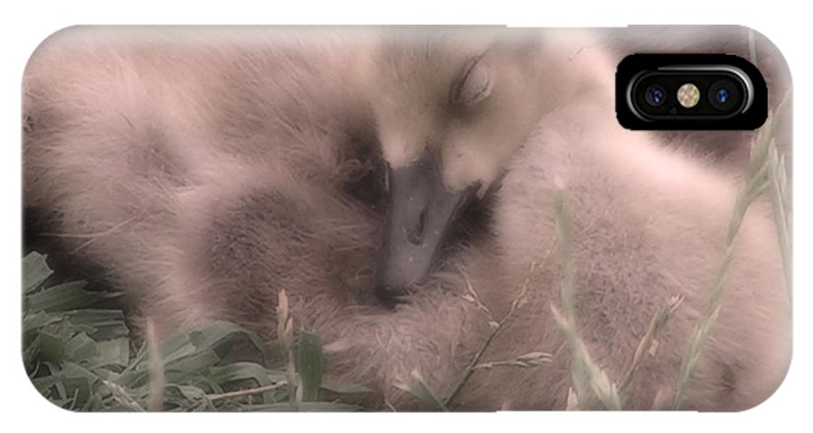 Goose IPhone X Case featuring the photograph All Is Right In My World by Kenneth Krolikowski