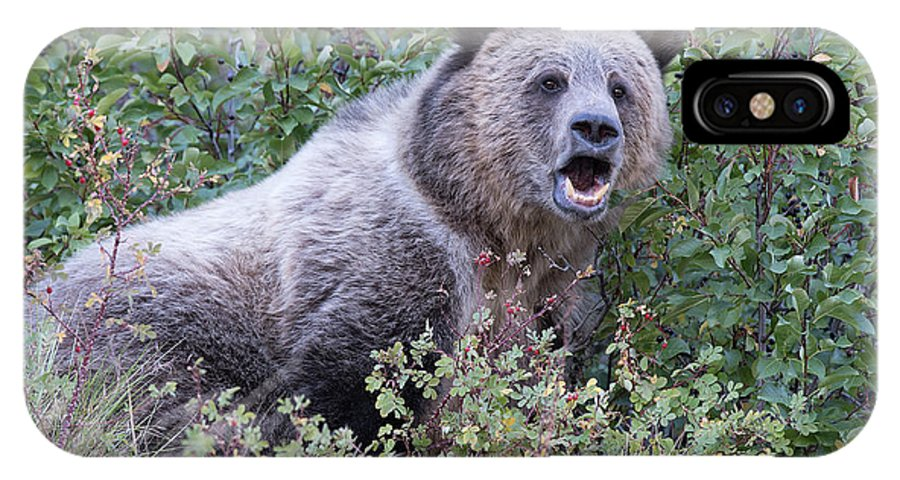 Grizzly IPhone X Case featuring the photograph All Mine by Connie Troutman