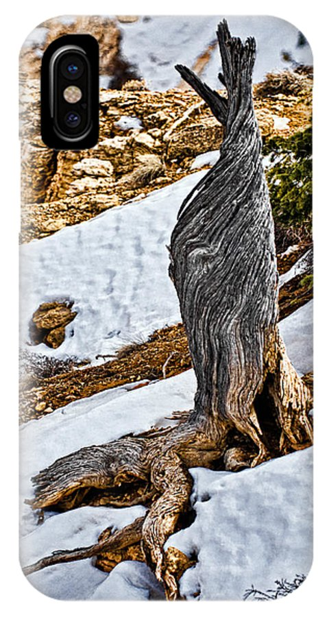 Tree IPhone X Case featuring the photograph All That Remains by Christopher Holmes