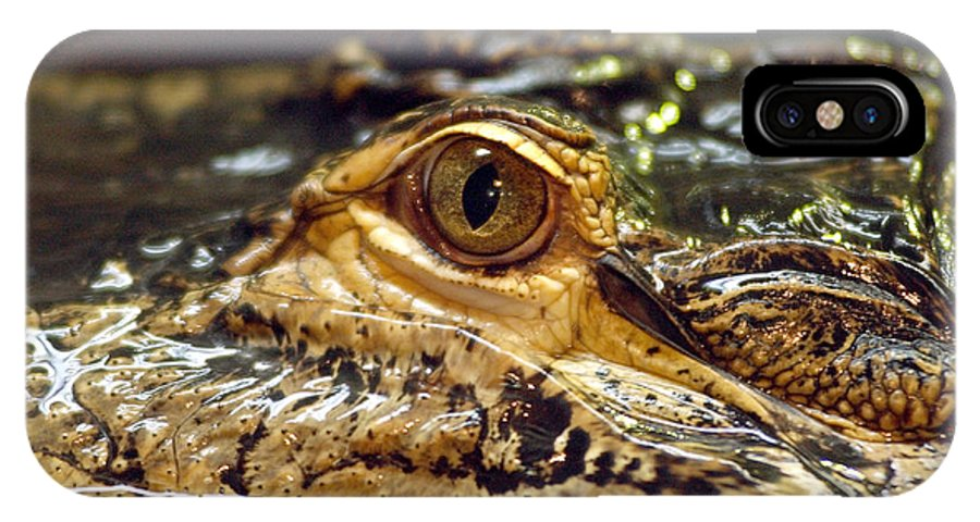 Alligator IPhone X Case featuring the photograph Alligator Eye Close Up-2 by Steve Somerville