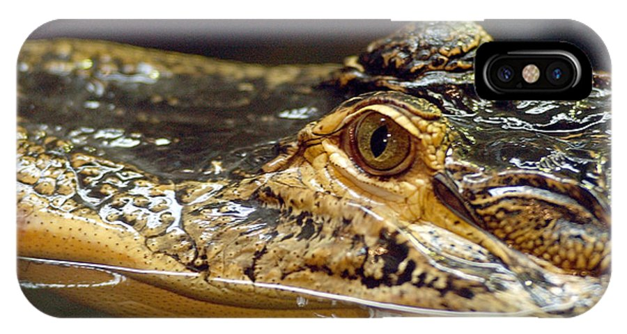 Alligator IPhone X Case featuring the photograph Alligator Eye Close Up by Steve Somerville