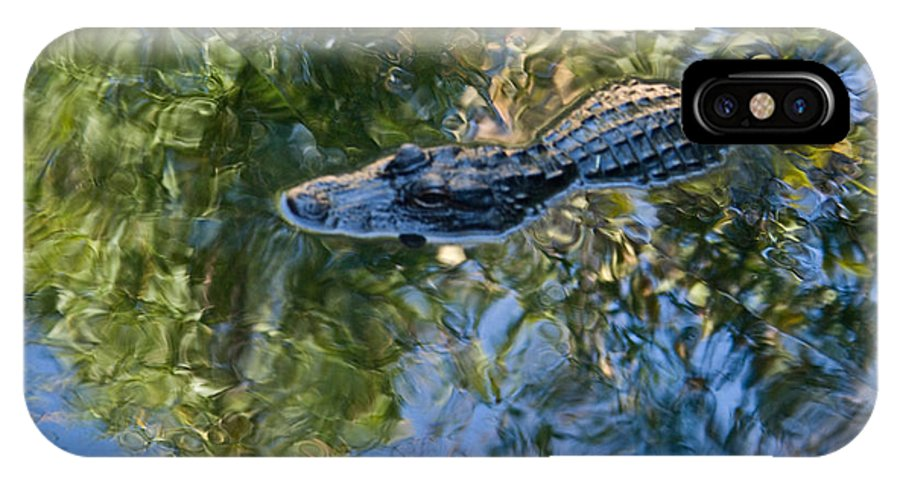 Alligator IPhone X Case featuring the photograph Alligator Stalking by Douglas Barnett