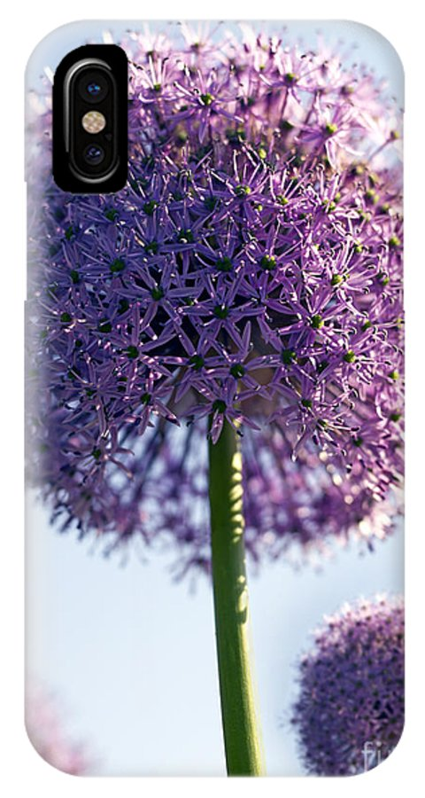 Allium IPhone X Case featuring the photograph Allium Flower by Tony Cordoza