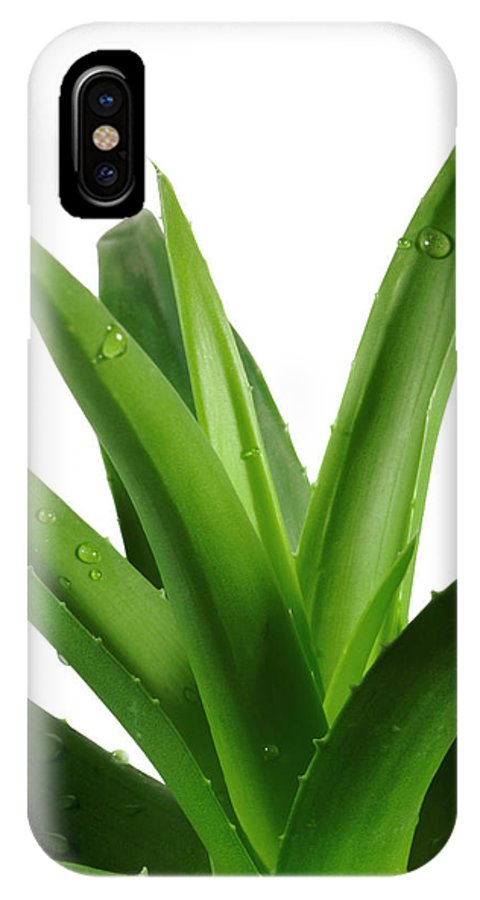 Aloe IPhone X Case featuring the photograph Aloe Vera by Jelena Stojic