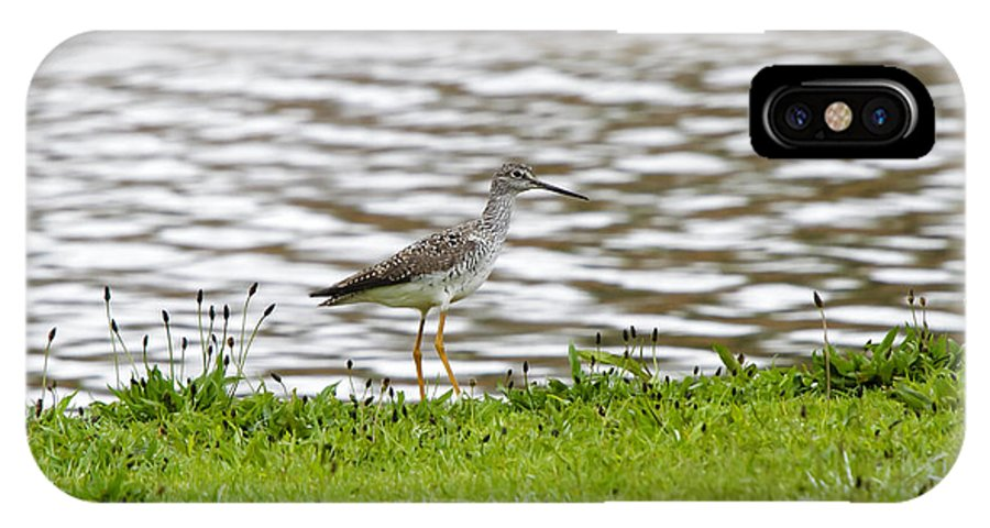 Sand Pipers IPhone X Case featuring the photograph Alone Again by Donald Crosby