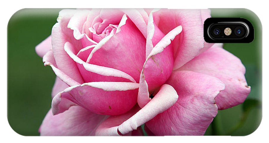 Rose IPhone X Case featuring the photograph Alone Time by Amanda Barcon