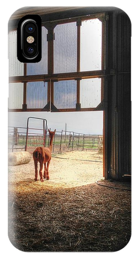 Alpacas Cria Babies Farm Straw Lookout Animals Fiber Ranch Born Shearing Fleece Animal Farm Office View Barn Shed Stable Look Out View Ceria  IPhone X / XS Case featuring the photograph Alpacca Guard by David Matthews