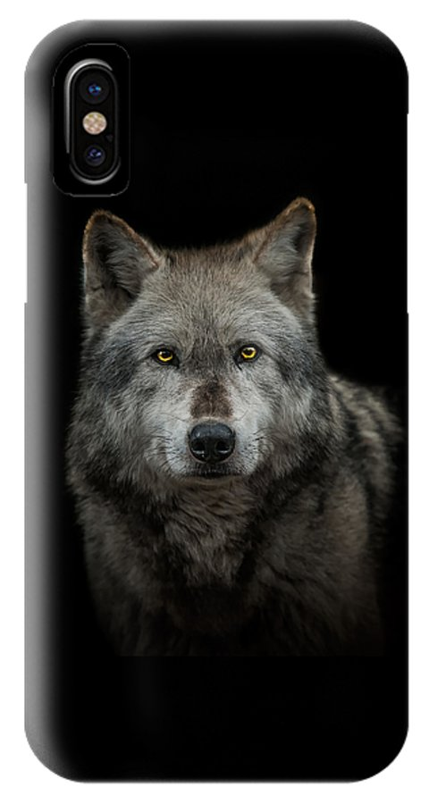 Alpha IPhone X Case featuring the photograph Alpha Male by Paul Neville
