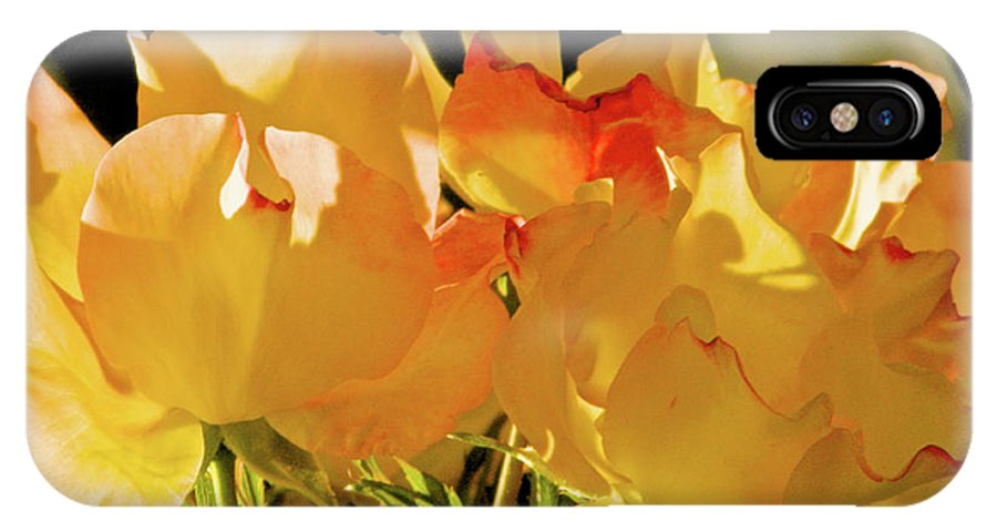Yellow Rose IPhone X Case featuring the photograph Amarillo 004 by Michael Genevro