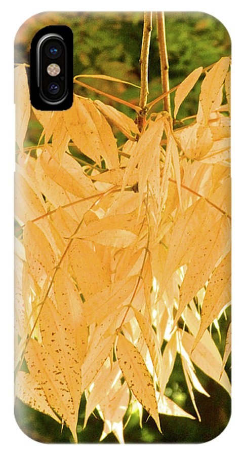 Autumn IPhone X Case featuring the photograph Amarillo 005 by Michael Genevro