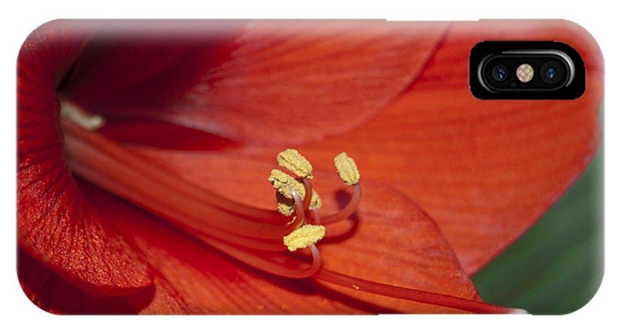 Amaryllis IPhone X Case featuring the photograph Amaryllis by Larry Keahey