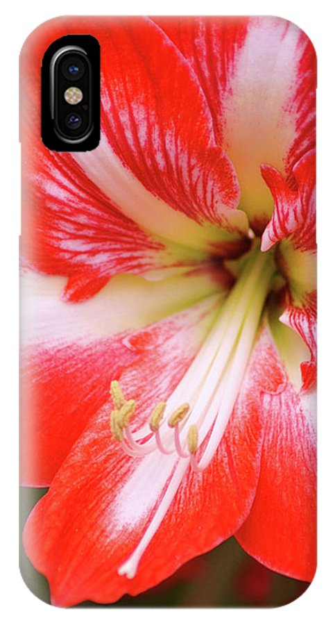 Flower IPhone X Case featuring the photograph Amaryllis Red by Donna Bentley