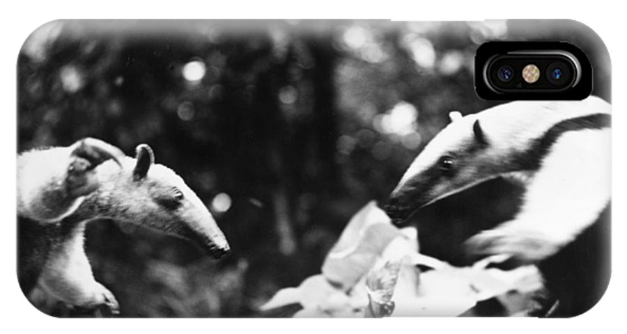 20th Century IPhone X Case featuring the photograph Amazon: Anteater by Granger