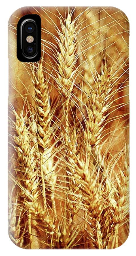 Wheat IPhone X Case featuring the photograph Amber Waves Of Grain 1 by Marty Koch