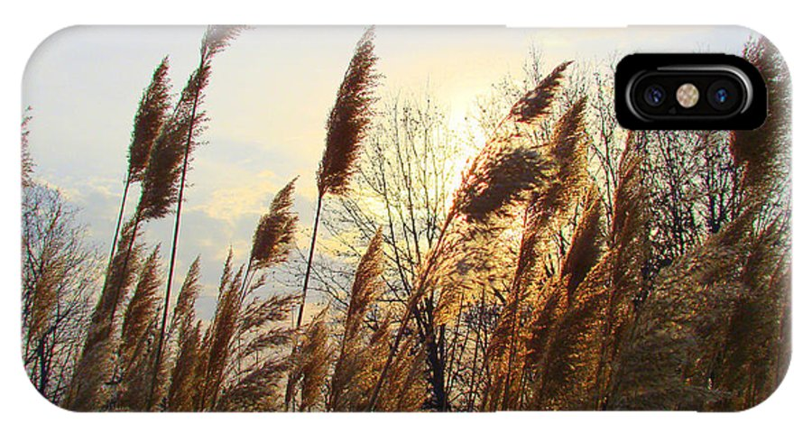 Pampasgrass IPhone X Case featuring the photograph Amber Waves Of Pampas Grass by J R Seymour