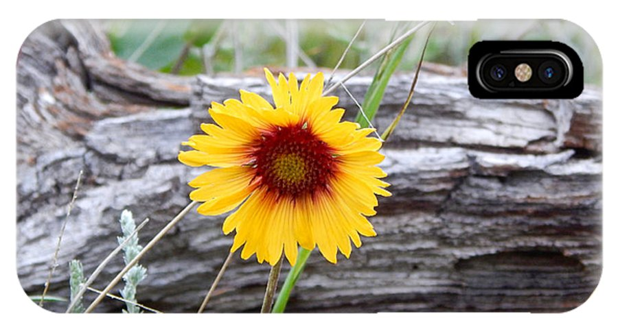 Photo IPhone X / XS Case featuring the photograph Amber Wheels Blanket Flower by Dan Miller