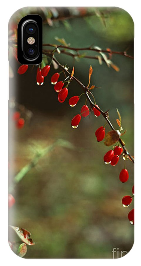Pennsylvania IPhone X Case featuring the photograph American Barberry With Raindrops by Anna Lisa Yoder