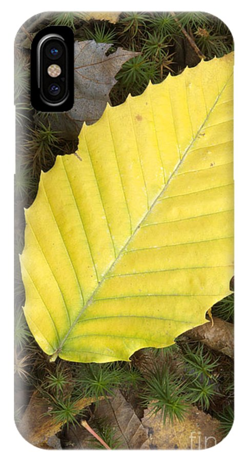 Autumn IPhone Case featuring the photograph American Beech Leaf by Erin Paul Donovan