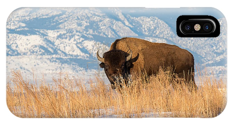 Nature IPhone X Case featuring the photograph American Bison In Front Of The Rocky Mountains by Tony Hake