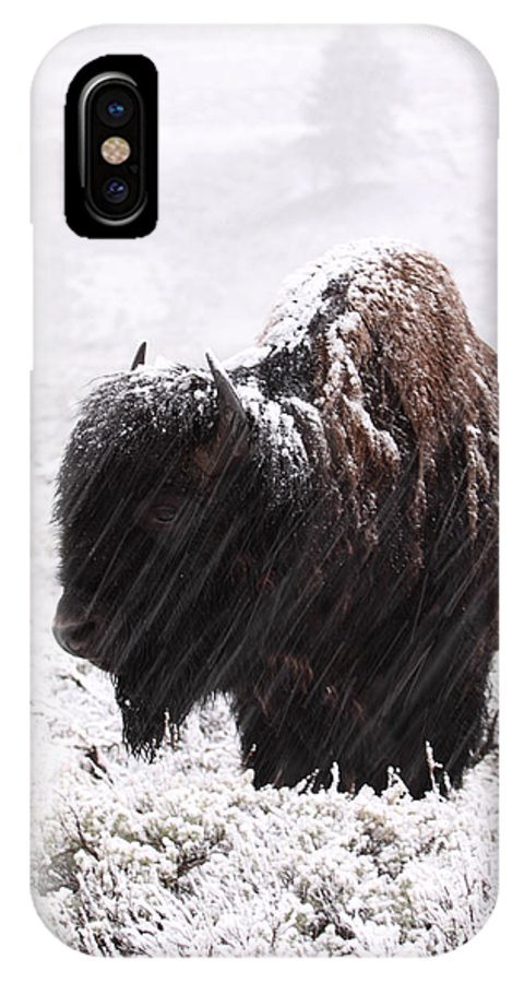American Bison IPhone X Case featuring the photograph American Bison In Snowstorm by Max Allen