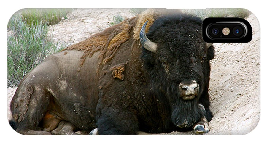America IPhone X Case featuring the photograph American Bison by Karon Melillo DeVega