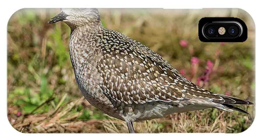 American Golden Plover IPhone X Case featuring the photograph American Golden Plover by Morris Finkelstein