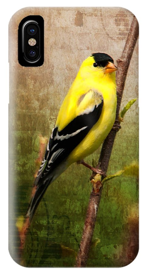 American Goldfinch IPhone X Case featuring the photograph American Goldfinch by Al Mueller