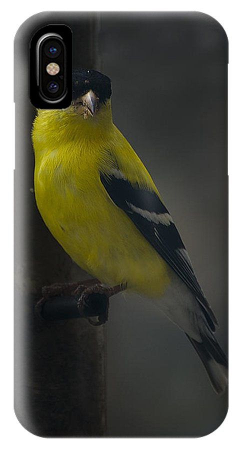 American Goldfinch IPhone X Case featuring the photograph American Goldfinch by David Hook