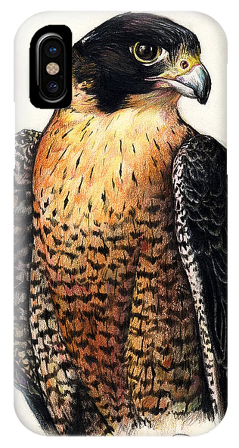 American Peregrine IPhone X Case featuring the drawing American Peregrine by Adesina Artist