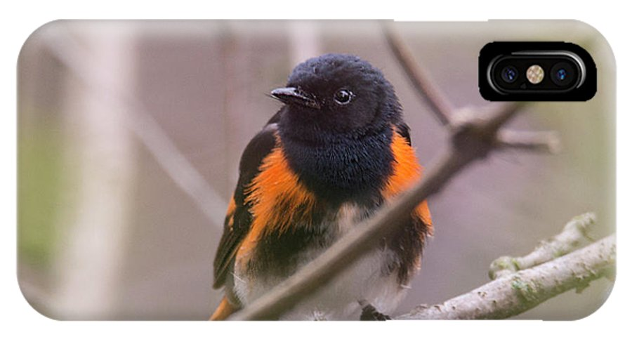 Warbler IPhone X / XS Case featuring the photograph American Redstart by Mark Stephens