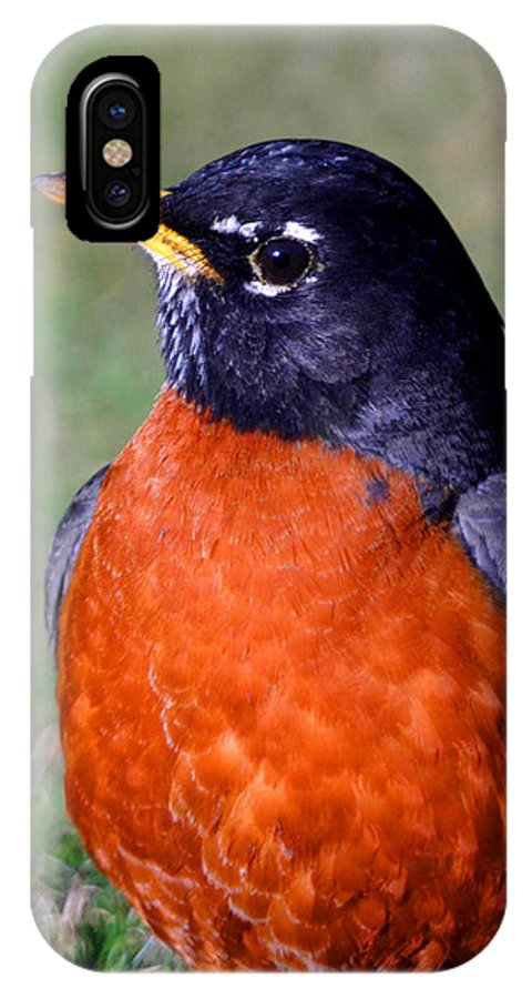 Bird IPhone X Case featuring the photograph American Robin by Karol Livote