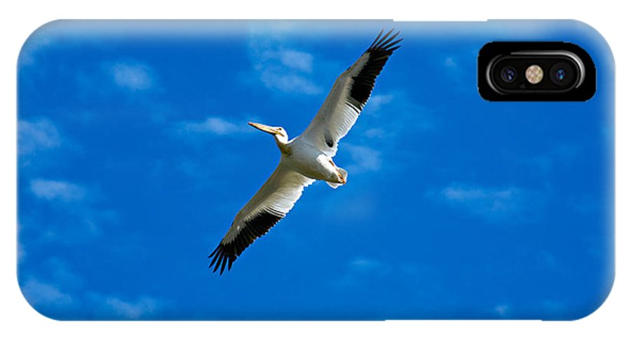 American IPhone X Case featuring the photograph American White Pelican by Marilyn Hunt
