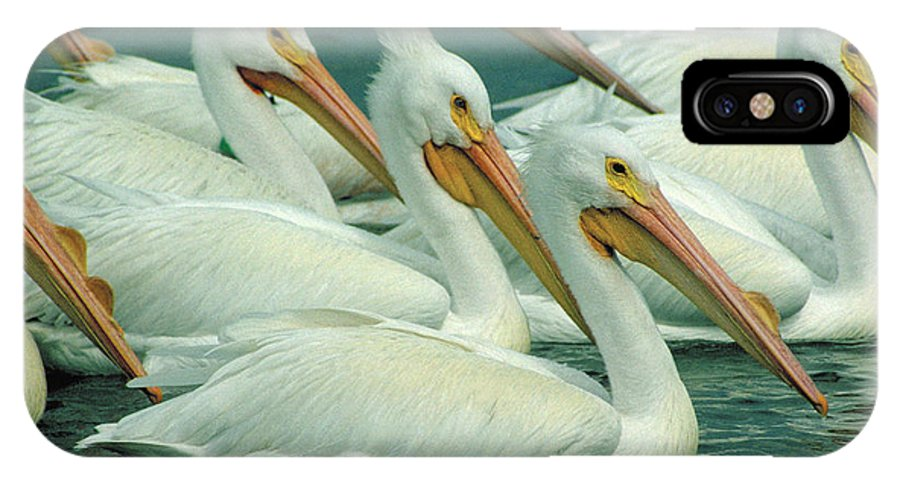 White Pelicans IPhone X Case featuring the photograph American White Pelicans by Bruce Morrison