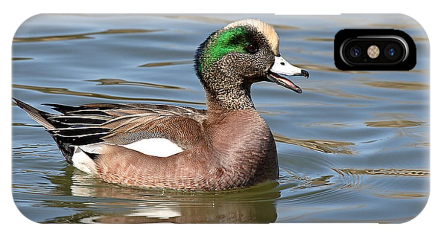 Widgeon IPhone X Case featuring the photograph American Widgeon Calling From The Water by Max Allen