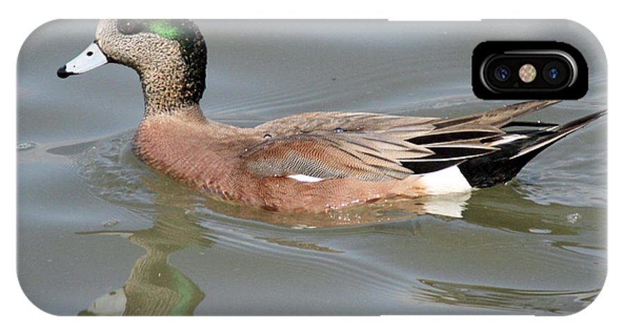 American IPhone X Case featuring the photograph American Wigeon Duck by Pierre Leclerc Photography