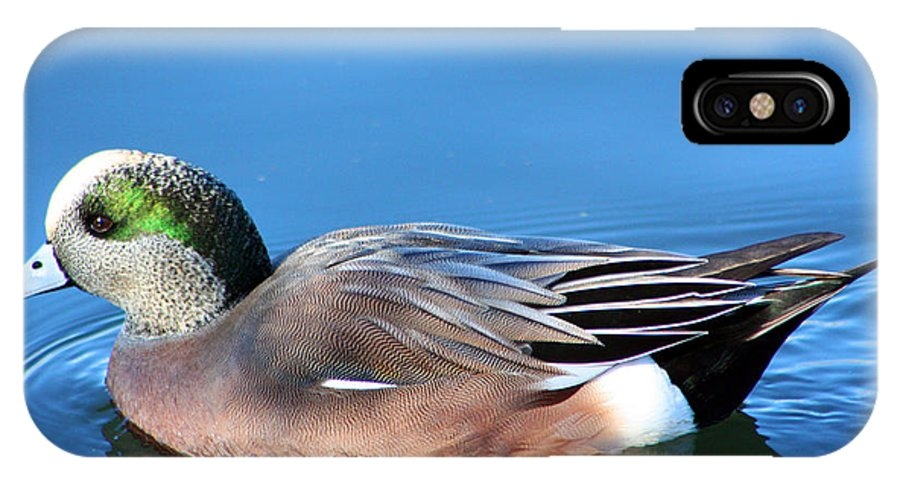 American Wigeon IPhone X Case featuring the photograph American Wigeon by Nick Gustafson