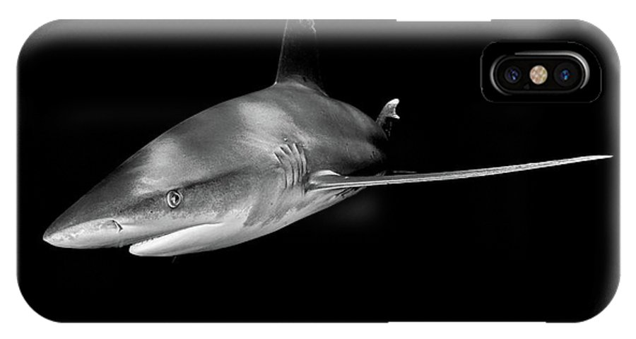An Oceanic White Tip Shark In Black And White IPhone X Case featuring the photograph An Oceanic White Tip Shark In Black And White by Brent Barnes
