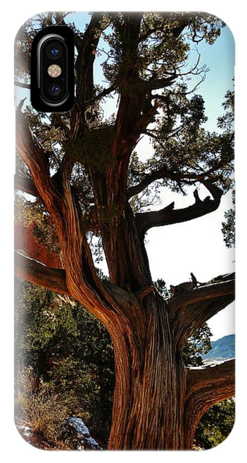 Colorado IPhone X Case featuring the photograph Ancient Juniper by CL Redding