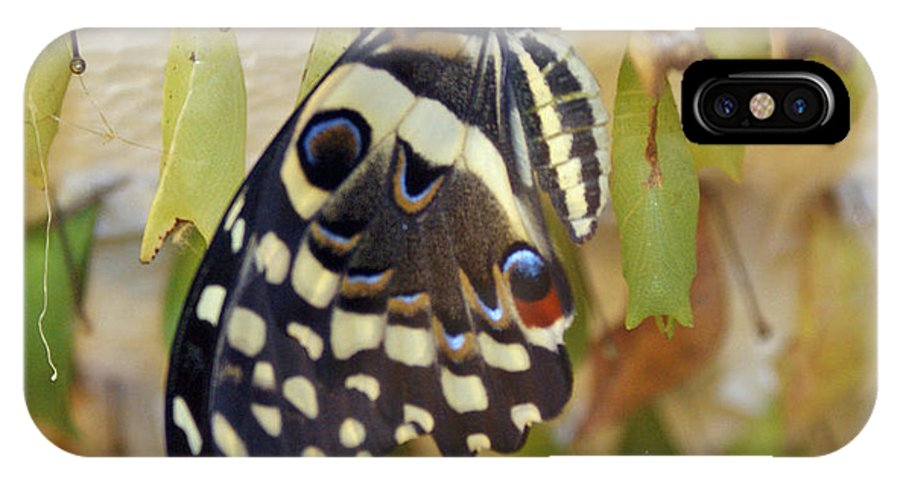 Butterfly IPhone X Case featuring the photograph And Life Begins by Shelley Jones