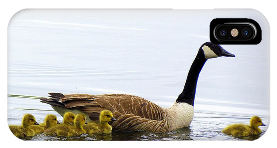 Geese IPhone X Case featuring the photograph And The Littlest One Shall Lead The Way by Lori Pessin Lafargue