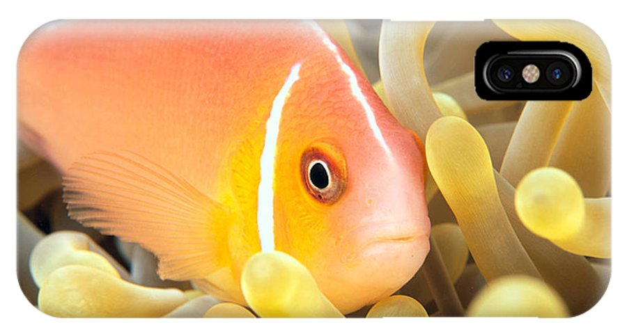 30-pfs0127 IPhone X Case featuring the photograph Anemone, Close-Up by Dave Fleetham - Printscapes