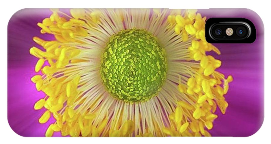 Beautiful IPhone X Case featuring the photograph Anemone Hupehensis 'hadspen by John Edwards