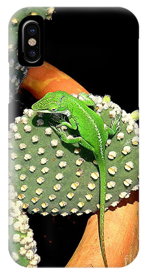 Nature IPhone X Case featuring the photograph Anole Hanging Out With Cactus by Lucyna A M Green
