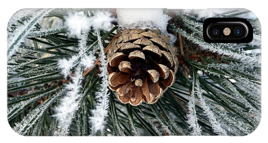 Frost IPhone X Case featuring the photograph Another Frosty Pine Cone by RiaL Treasures